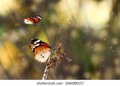 Butterfly's community.