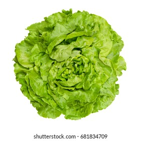 Butterhead lettuce from above. Also Boston or Bibb lettuce. Round lettuce. A green head salad with loose arrangement of leaves. Variety of Lactuca sativa. Closeup photo isolated on white background.