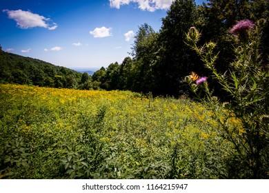 butterly in a flower field