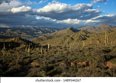 Buttes and Saguaros along Apache Trail in Arizona.