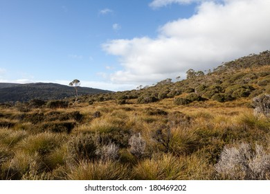 Button grass meadow
