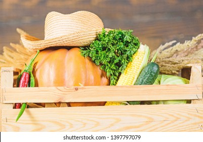 Buy fresh homegrown vegetables. Box or basket harvest vegetables wooden background. Excellent quality vegetables. Just from garden. Grocery shop concept. Delivery service fresh vegetables from farm.