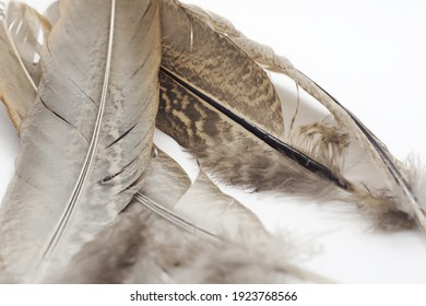buzzard feathers from the forest