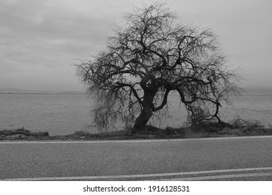 bw photo of a tree without leaves near the sea on winter time