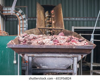 Byproducts from a sheep abattoir in the input bin of a meat and bone rendering plant for processing to meat and bone meal, a valuable animal feed supplement.