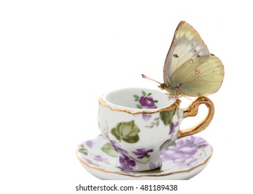 bytterfly on a china cup
