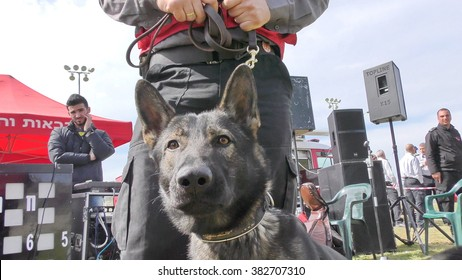 CAABIYA, ISRAEL - FEBRUARY 10, 2016: Firefighter dog trainer holds his obedient working watchdog for law enforcement, crime fighting, anti terrorism and security during drill, to increase awareness