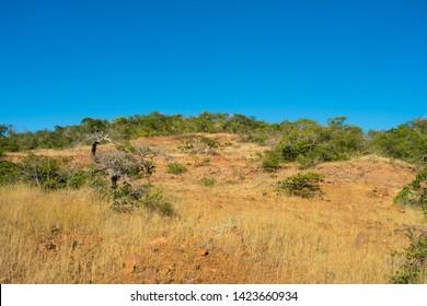 Caatinga biome vegetation in the countryside of Oeiras - Piaui state, Brazil