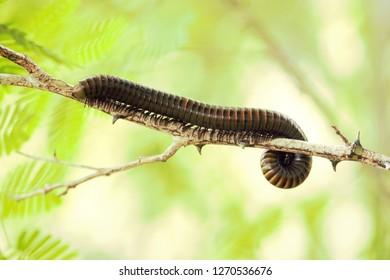 caatinga invertebrate animal