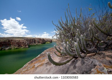 Caatinga vegetation on the edges of the Canyon do Talhado - flooded by the waters of the reservoir of the Xingó Hydroelectric Power Plant - São Francisco River - Delmiro Gouveia, Alagoas, Brazil