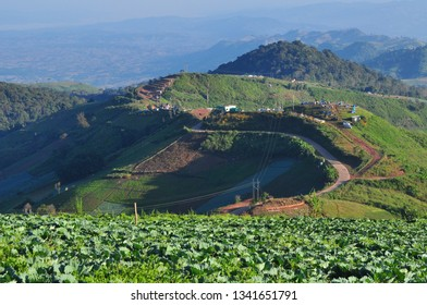 Cabbage garden with camp and view on morning