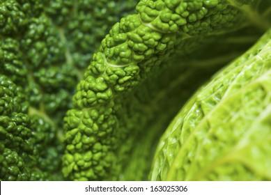 cabbage leaf detail