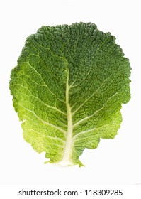 cabbage leaf similar to a tree is isolated on the white