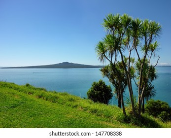 Cabbage palm tree in front of a seview with Rangitoto Island in the background