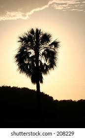 A cabbage palm tree silhouetted against the sunset.
