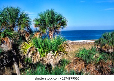 Cabbage Palms, beach, Fort DeSoto County Park, St. Petersburg, Pinellas County, Florida, USA