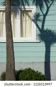 Cabbage tree palm casting shadow on old weatherboard house, Eastbourne Wellington New Zealand