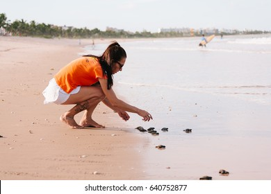 Cabedelo, Paraiba, Brazil - May 15, 2017 - Hawksbill sea turtle hatchlings being released to sea by a volunteer of a turtle conservation program - NGO Guajiru
