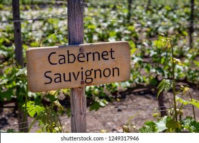 CABERNET SAUVIGNON Wine sign on vineyard. Vineyard landcape.