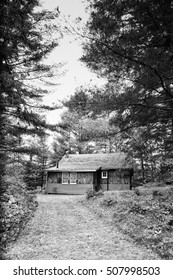 Cabin In The Woods Forest Monochrome