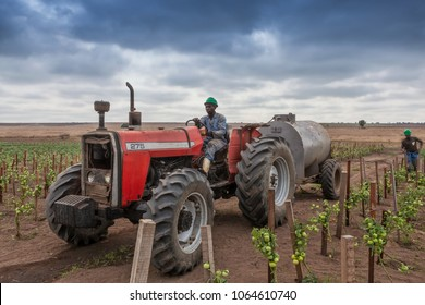 CABINDA/ANGOLA - 09JUN2010 - African farmer on tractor to cross plantation of tomatoes.