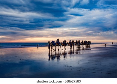 Cable Beach, Western Australia. Camels on the shore at sunset