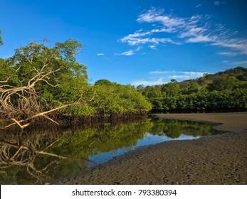 Cabuyal, Costa Rica mangrove