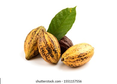 Cacao or Chocolate Tree ,fruits and green leaves on a white background.