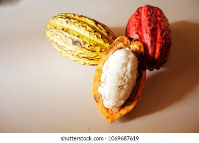 cacao criollo de madagascar exposé sur une table