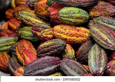 Cacao ecuador pods