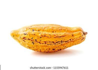 cacao fruits isolated on white background