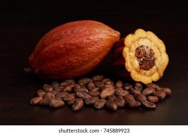 Cacao harvest fruit theme. Agriculture of cocoa pod with dry seeds
