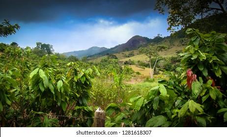 Cacao plantation, with sacred mountain background, in the Jiquirica valley, near Ubaira, Bahia, Brazil