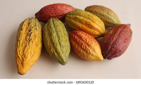 cacao pods that are ripe and ready for further processing