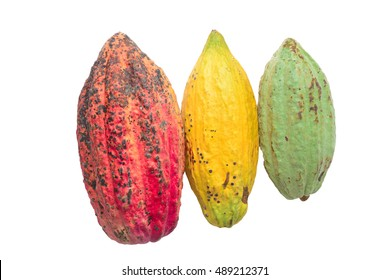 Cacao (Theobroma cacao) leaves and seeds of truth On a white background.