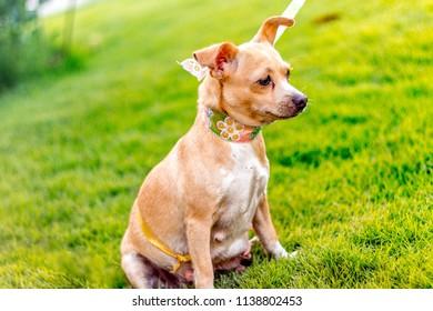 Cachorros familia perros