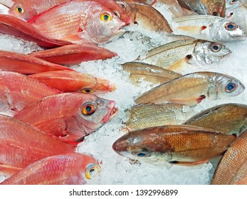 Cachucho and Sea bream for sale
