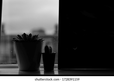 Cactae standing on the windowsill in Black and white
