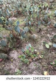 Cacti ground pattern in autumn