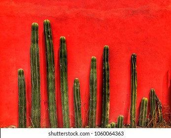Cacti on a Red Stucco Wall in Mexico