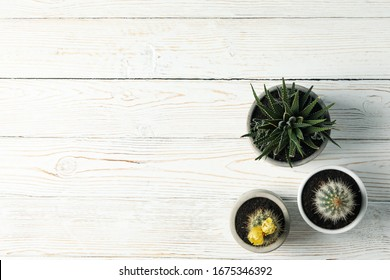 Cacti on wooden background, space for text