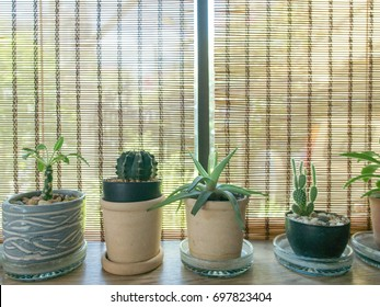 Cacti on the wooden desk and brown bamboo curtain on top with copy space