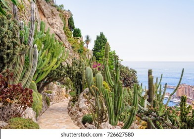Cacti and other succulents on the cliff side of the Jardin Exotique overlooking the Mediterranean Sea - Monaco