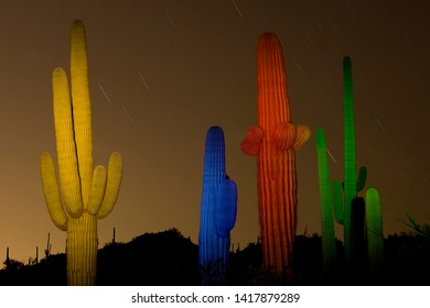 cacti painted in multicolored light with a flashlight.