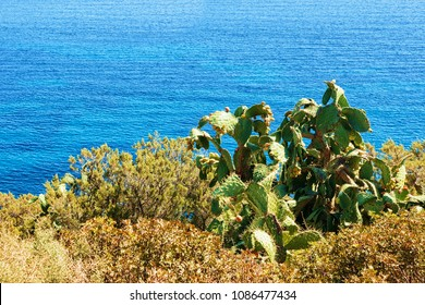 Cacti plant and Coast in the Mediterrenian sea in Villasimius, Cagliari, South Sardinia in Italy