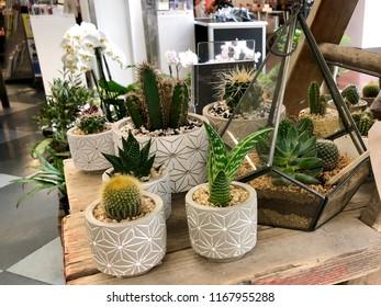 Cacti in pots and a terrarium