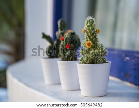 Cacti Succulents Small White Flower Pots Stock Photo Edit Now