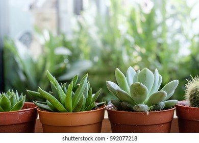 The cactus
