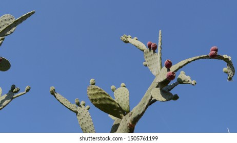 A cactus against a crystal blue sky.