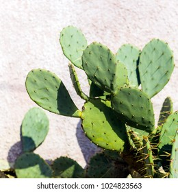 cactus against wall sunny day  square image